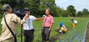 Sumsel Bisa Produksi Bawang Merah