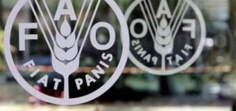 Pramuka-FAO Gelar Lomba Poster-Video Hari Pangan Dunia