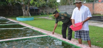 Bios 44 Juga Bisa Membuat Air Kolam Ikan Tetap Jernih