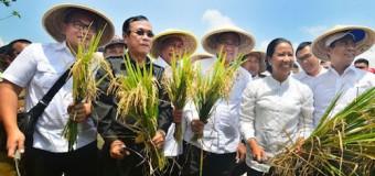Mentan Luncurkan Asuransi Sawah dan Sapi Hindarkan Petani dari Kerugian