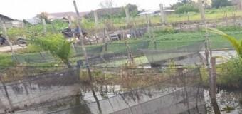 DKP Ingatkan Petani Ikan Antisipasi Herbisida