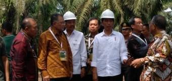 Replanting Sawit, Pemerintah Komit Tingkatkan Kesejahteraan Komunitas Kebun Sawit Rakyat