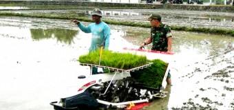 Uji Alat Mesin Tanam Padi FFD, Babinsa dan PPL Pertanian Bantu Petani