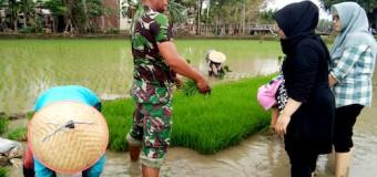 Selain Dampingi Petani, Babinsa Ini Juga Bagi Ilmunya Bagi Mahawiswi PPL