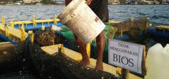 Uji Coba Penggunaan Bios 44 di Maluku Sudah Menunjukan Hasil