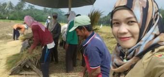 Babinsa Koramil 406-06/Tugumulyo Lakukan Pendampingan Upsus Panen Padi