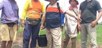 Arah Pembangunan Pertanian Sudah Benar, Tata Niaga Tinggal Dibenahi