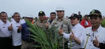 Beni Akan Terus Pantau Program Replanting Kelapa Sawit