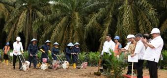Tiga Kecamatan di Muara Enim Dapat Alokasi Bantuan Dana Replanting Sawit