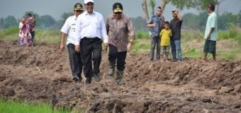 Mentan RI Tinjau Lokasi Pilot Project Pengembangan Lahan Rawa di Banyuasin