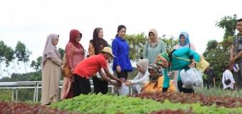 Mantan Pejabat Pemkot Ramai-Ramai Panen Sayur di Kebun Bu Feby