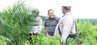 All Out Dukung Biofuel, Inovasi Bupati Dodi Reza Konversi Sawit Menjadi Biofuel
