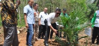 Petani Sawit :Terima Kasih Pak Bupati, Program Replanting Sawit